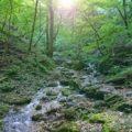 【御岳山・ロックガーデン】東京から日帰りで大自然を満喫しよう!